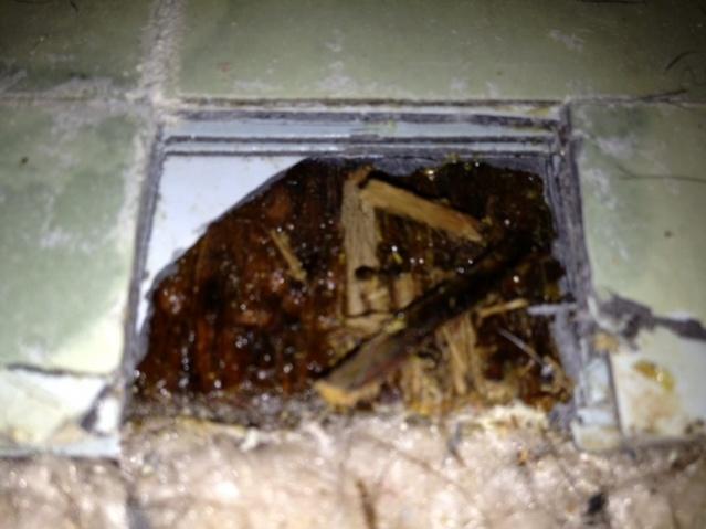 Bathroom floor under tile-photo-4.jpg
