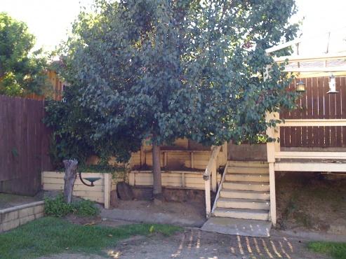 Genial How Do I Fix My Backyard? Photo 5.