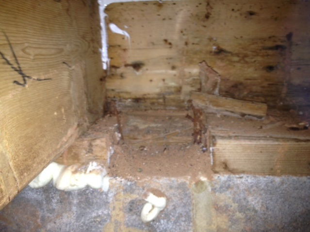 Need help fixing sill plate / rim joist due to carpentar ants / water-photo-5.jpg