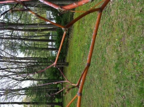 Is this tree dead?-photo.jpg