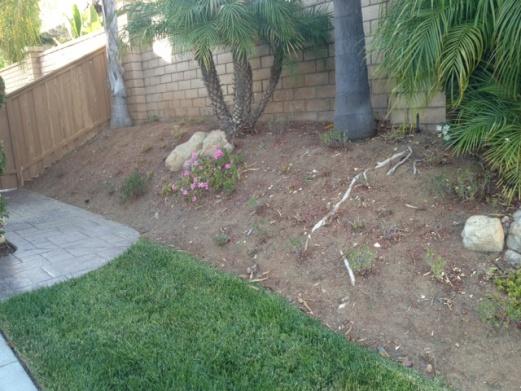 Front Yard Ideas - need help-photo.jpg