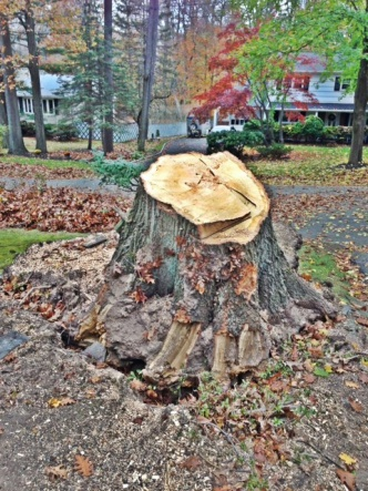 Tree Stump-photo.jpg