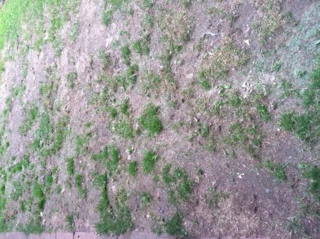 Lawn Help Needed-photo1.jpg