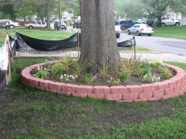 Low retaining wall around a tree-photo2.jpg