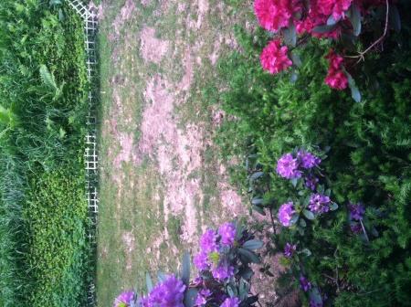 Lawn Help Needed-photo2.jpg