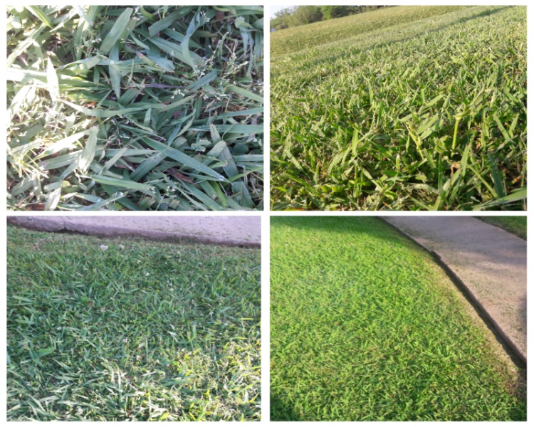 Grass growing extremely fast, what can i use?-photogrid_1492474940519-800x640_1492479460875.jpg