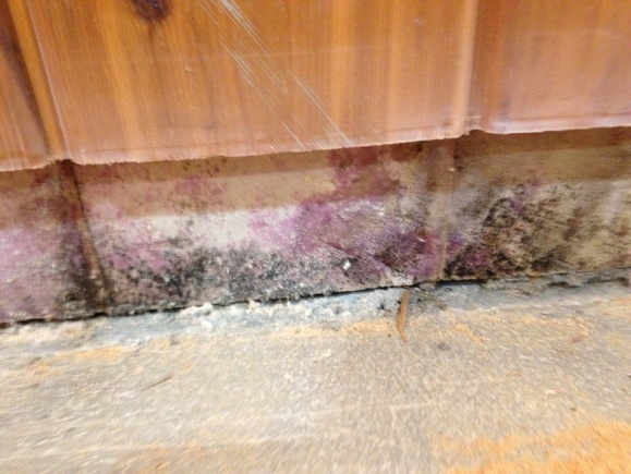 Water Damage in Basement-pic-2.jpg