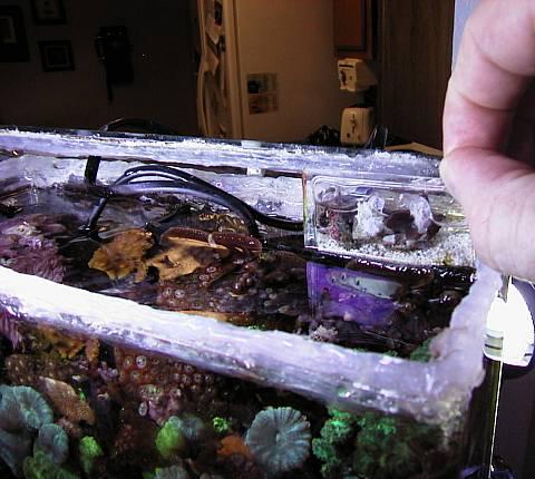 Live coral vases as a new type of aquarium decor-pickupsubrefugium.jpg