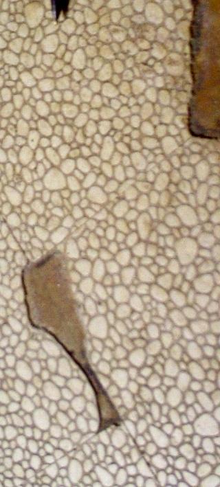 Patching Vinyl Floor Before Carpeting-pict0202.jpg