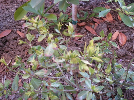 Does anyone know what happen to my plants??-picture-007.jpg