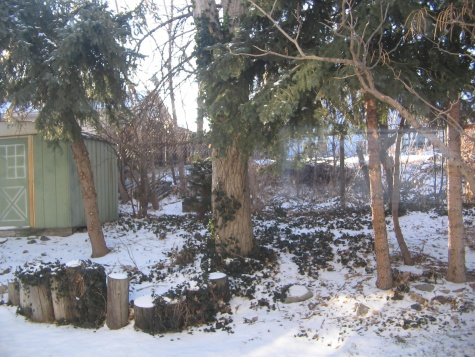 My back yard needs help!-picture-092.jpg