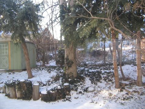 My back yard needs help!-picture-092.jpg