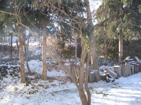 My back yard needs help!-picture-094.jpg