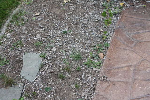 New Home... Existing Lawn-planter.jpg