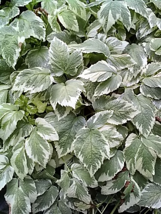 Plant ID-plants.jpg