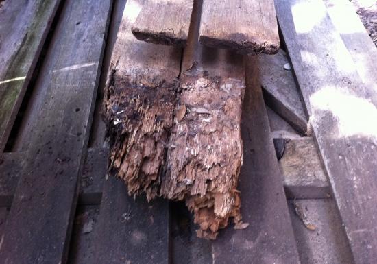 Can PT lumber rot?-ptwoodrot.jpg