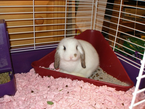 So I would like to convert this space into a place to my my pets.-rabbit-litter-box.jpg