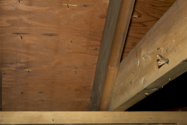 Move joists for higher ceiling-rafters3.jpg