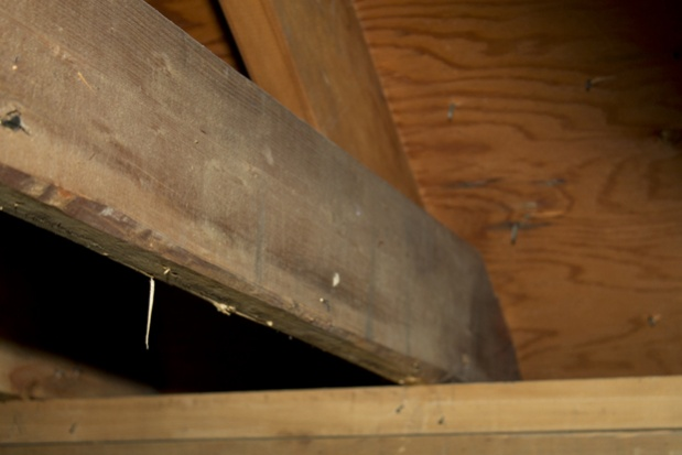 Move joists for higher ceiling-rafters4.jpg
