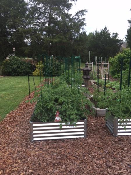 Metal Raised Garden Beds-raised-beds-early-june-2.jpg