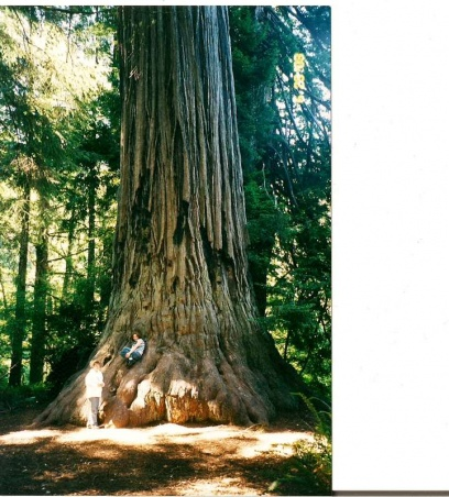 Gulf Island Building.-redwood-forest-2-re-sized.jpg