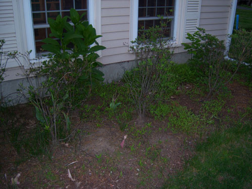 How to regain control of these mulch beds... *PICS*-right-mulch.jpg