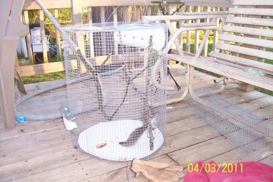 squirrel nest-rocky111.jpg