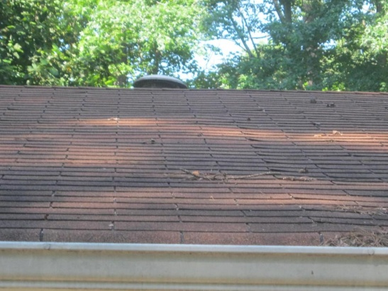 Shingles Curling-roof-0011.jpg