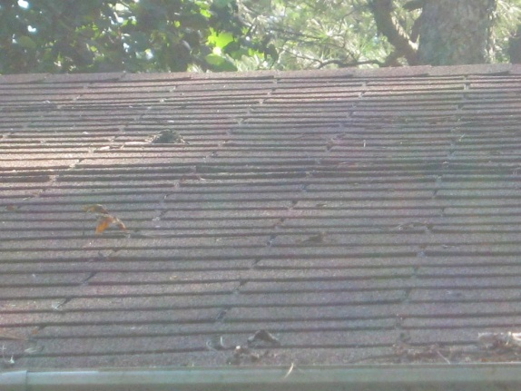 Shingles Curling Roofing Siding Diy Home Improvement