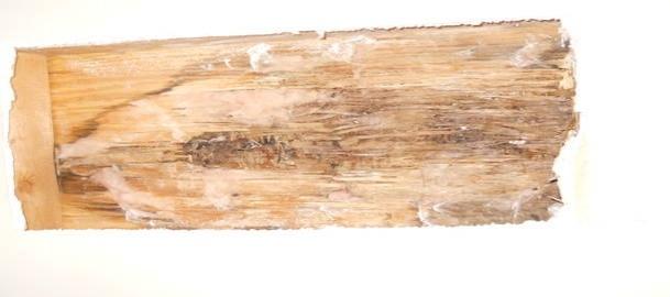 leak (hopefully fixed), some rotten wood-rsz_2dscn0526-1-.jpg