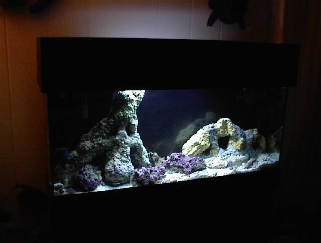 Reptile Cage Finished-saltwater-rocks.jpg