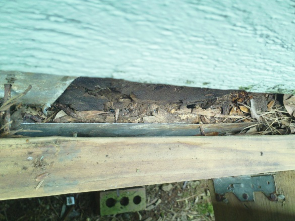 Rotten joist/sill plate - what expertise is needed?-sam_0548.jpg