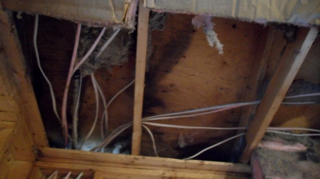 Is this mold???-sam_2821-800x450-640x360-.jpg