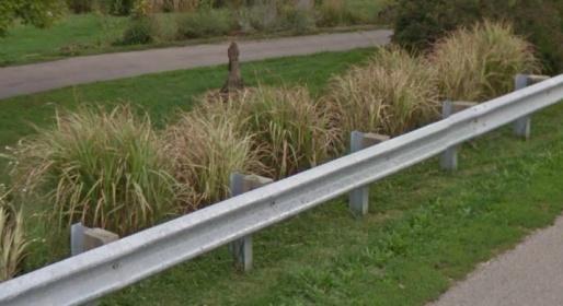 Ornamental Grasses - please help-screen-shot-2013-07-14-7.45.19-pm.jpg