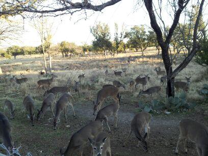 Deer in the yard-securedownload-5.jpeg