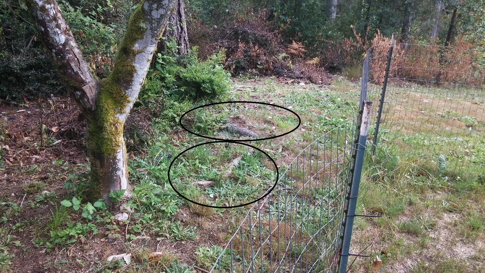 Planting in close proximity to septic tank-septic-tank-3.jpg