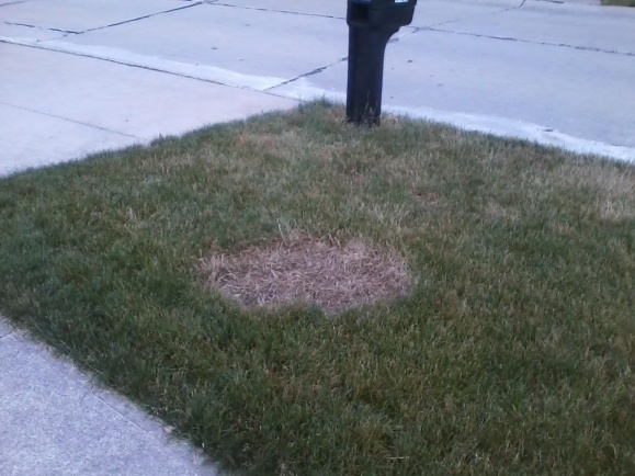 Every Year Same Large Lawn Spot Appears-spot-yard.jpg
