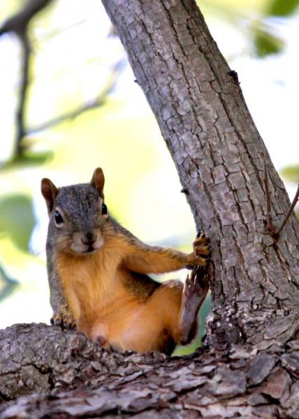 Squirrel squatter-squirrel-2013.jpg