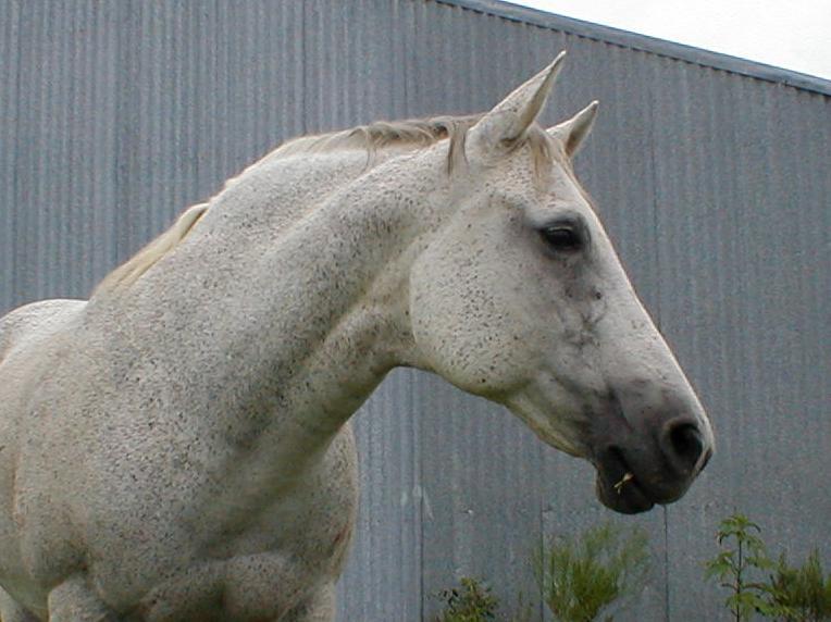 horses-star-aug04.jpg