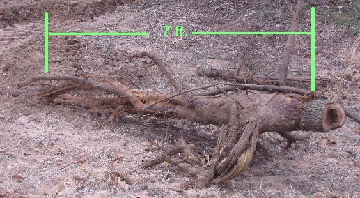 What equipment should I rent to grade my yard-stump-pulled-3-6-10.jpg