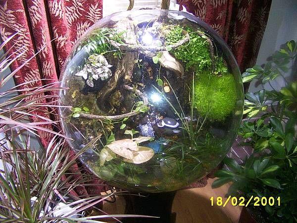 Live coral vases as a new type of aquarium decor-terrariumglobe.jpg