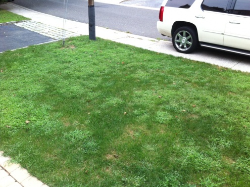 Lawn going downhill ... FAST-lawn-1.jpg