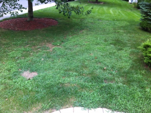 Lawn going downhill ... FAST-lawn-2.jpg