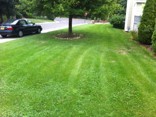 Lawn going downhill ... FAST-lawn-3.jpg