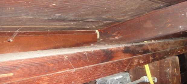 Unfinished garage/ ceiling joist under low pitched roof-top-plate-2.jpg