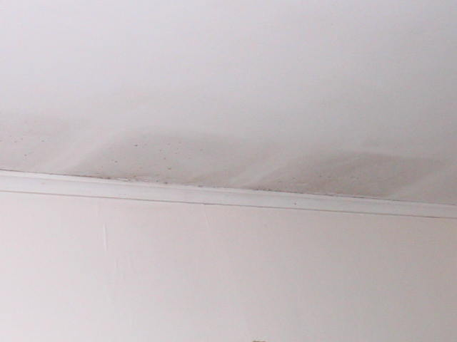 Ceiling wet And Mold fungi Building & Construction DIY