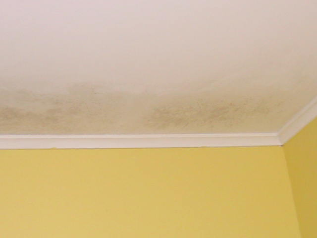 Ceiling Wet And Mold Fungi Building Amp Construction