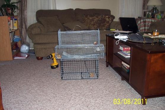 squirrel nest-trap111.jpg
