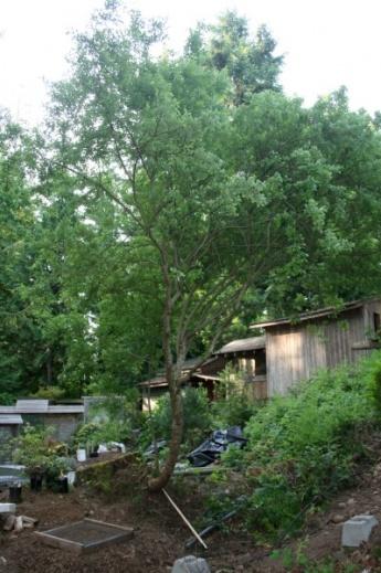 Gulf Island Building.-tree.jpg