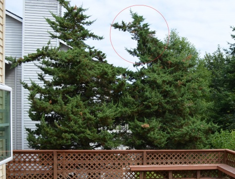 How to trim the top of a tree-tree.jpg